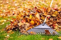 leaf_removal
